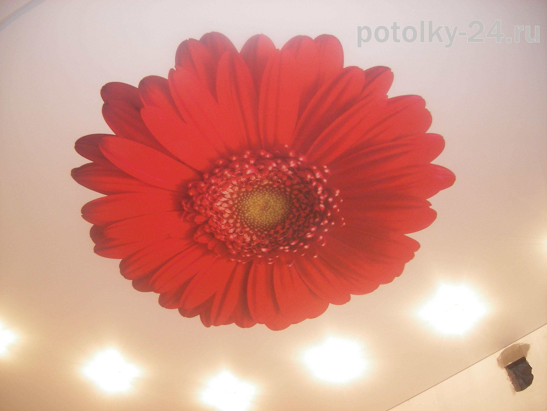 Цветок в кухне
